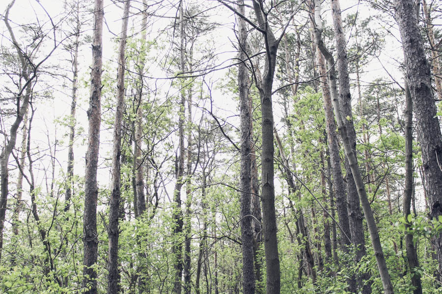 trail-ontario